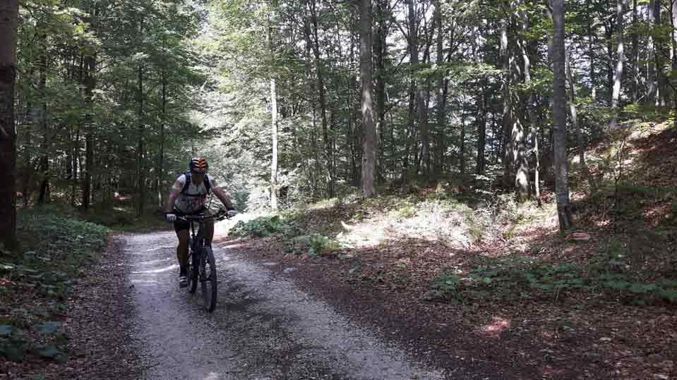 Valle del Baztán en bici a través de sus bosques