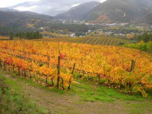 Valle de Valdeorras en bici Rutas Pangea