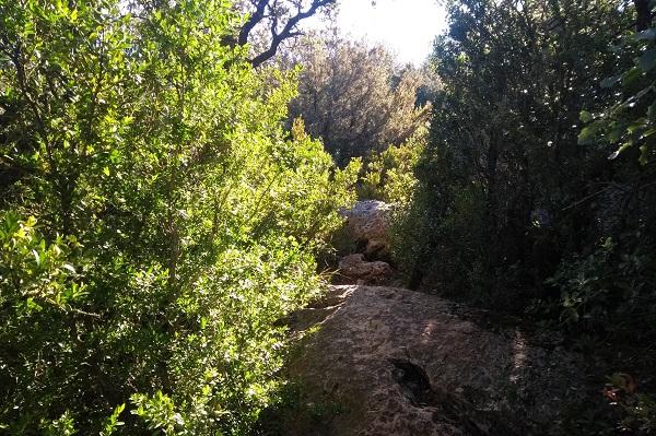 Ejemplo de paso flanqueado por arbustos