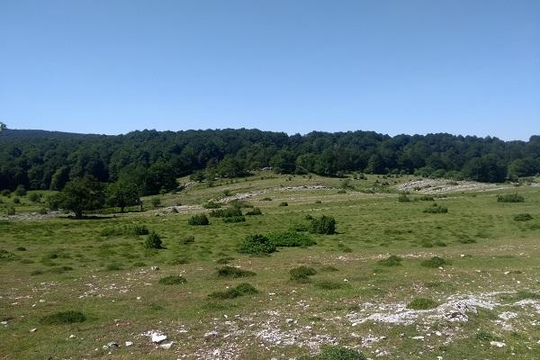 Cruzar prado y adentrarnos en el bosque