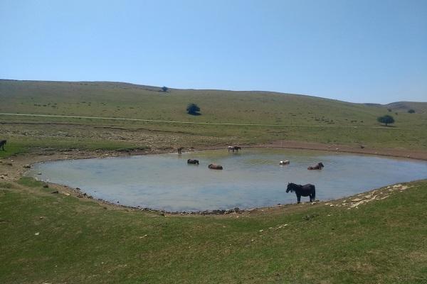 Caballos en la Balsa de Saratsa