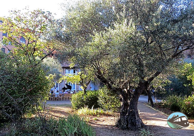 El Olivar de Castillejo - Madrid