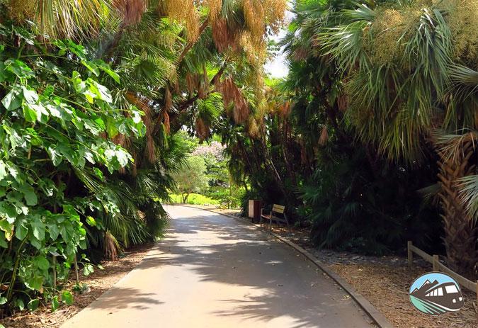 Palmetum – Santa Cruz de Tenerife