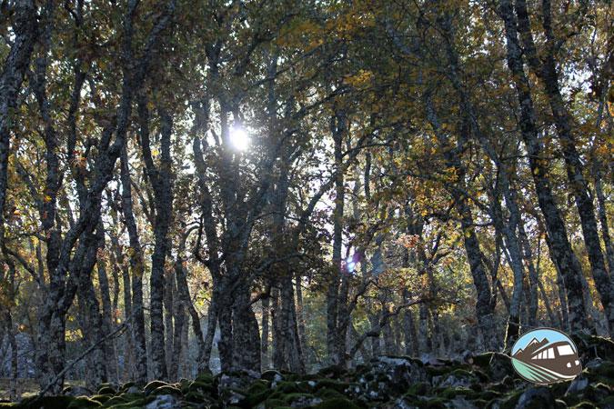 La Pedriza – Valle de Alcudia