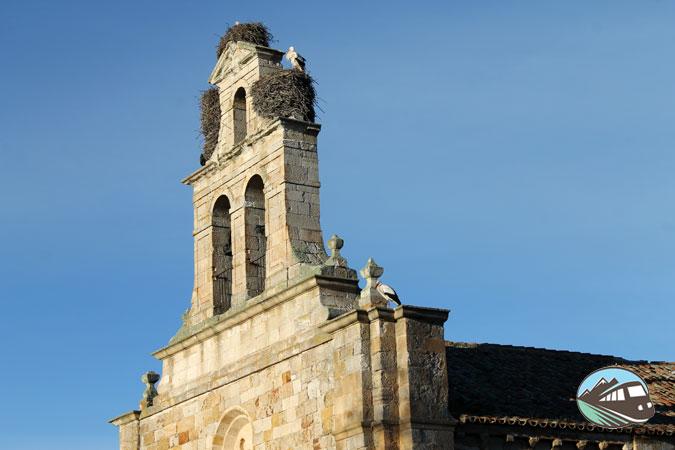 Las cigüeñas de Zamora