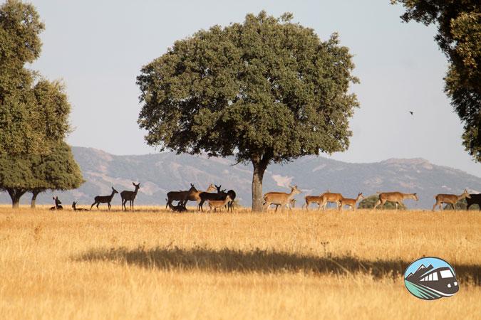 La Berrea - Parque Cabañeros