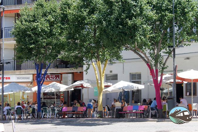 Arbol-Canchillo-Salamanca