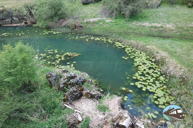 Nenúfares - Cañón del río Lobos