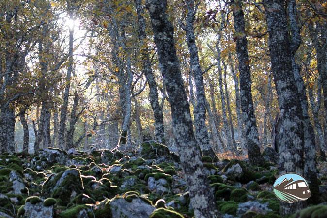 Pedriza del Valle de Alcudia
