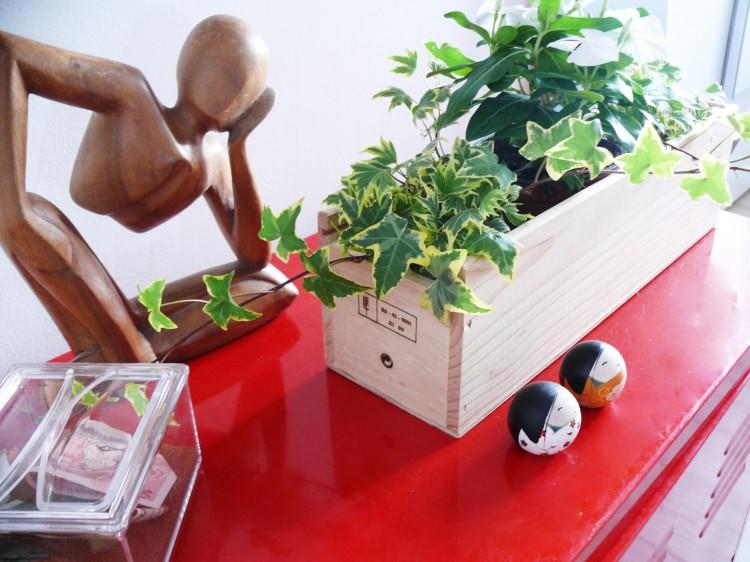 Plantas en caja de vino de madera