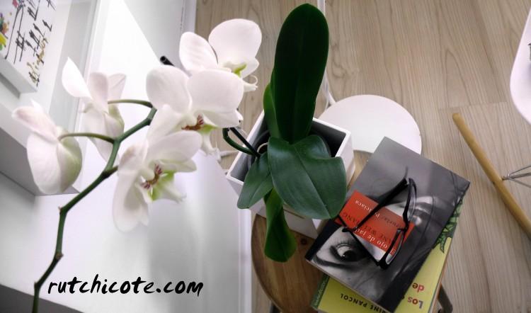 Decoración-con-plantas-orquidea