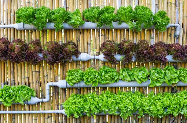 Jardín-vertical-de-tuberias4