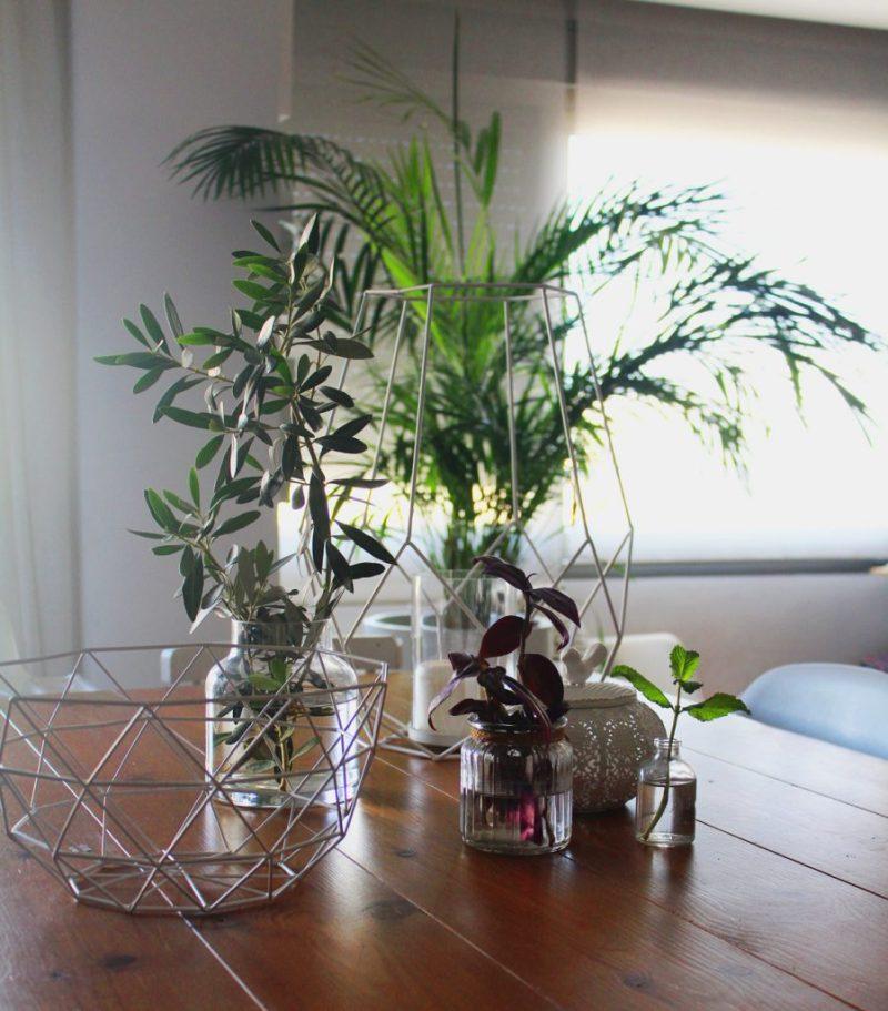 Decorar con plantas para ganar calidez