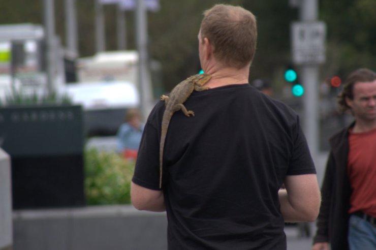 Melbourne - ihre Einwohner und Haustiere