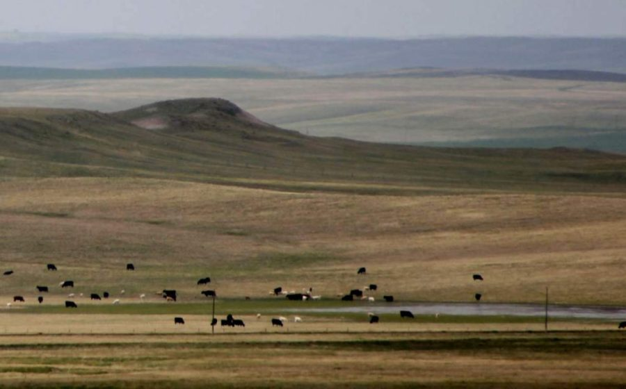 Prairie in South Dakota/USA © Ruth Barbara Lotter