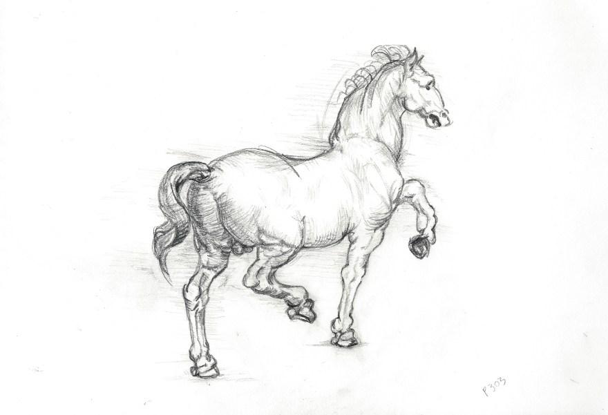 Study of a Horse After Leonardo Da Vinci - Art by Ruth Helen Smith