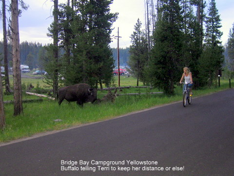 yellowstone,rv,parks,buffalo,bridge bay,camping