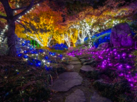 Lewis ginter holiday lights coupon archives enjoying rva and all it has to offer for Lewis ginter botanical gardens christmas