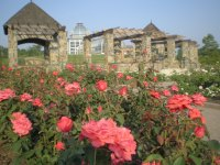 Rose Fest at Lewis Ginter is this weekend