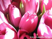 Mother's Day Weekend Events PLUS More
