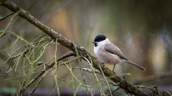 Höstens alla fåglar
