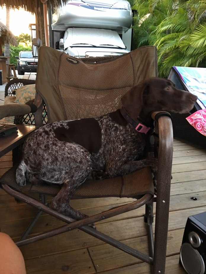 Top Tips For RVing With Pets