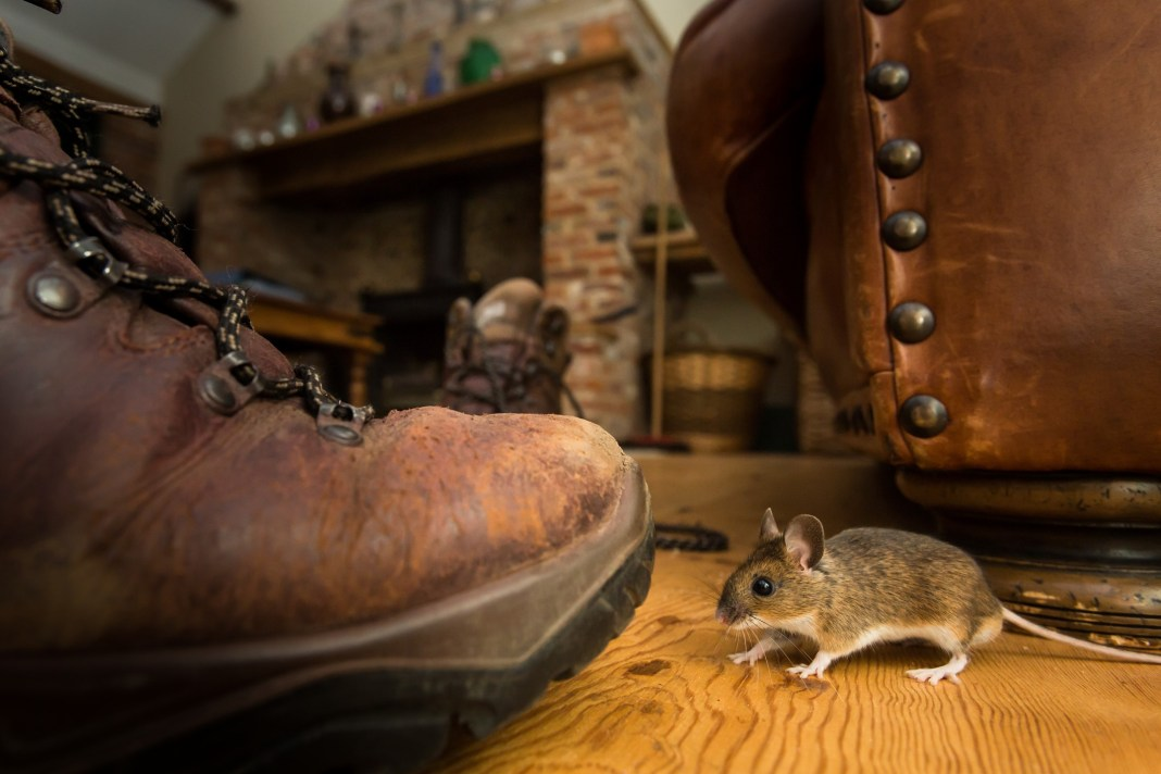 5 Ways To Keep Mice Out Of Your RV