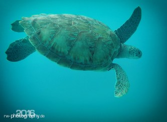 Video_Turtle_01