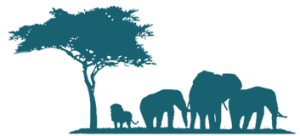 Eléphants safari en tanzanie