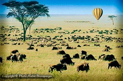 migration des gnous en Tanzanie Safari GIR départ le 10 de chaque mois 8jours 7 nuits