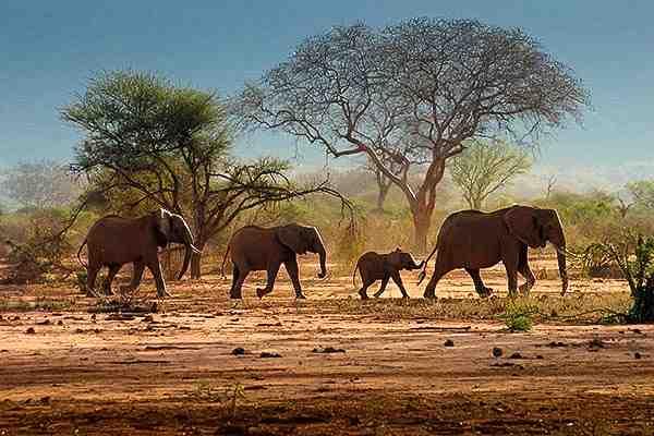 Parc du Tarangire - Nos safaris en Tanzanie