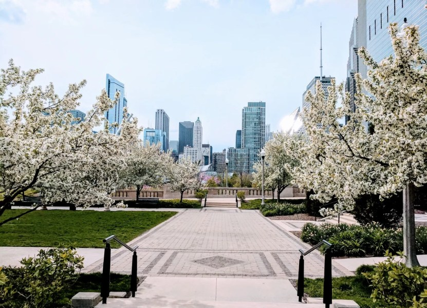 Types of Flowering Trees You Will See this Spring in the Chicago     Types of Flowering Trees You Will See this Spring in the Chicago Area    Hendricksen Tree Care Services