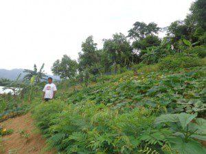 Sloping land Agriculture Technology (SALT)