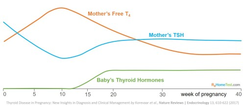Thyroid levels during pregnancy chart