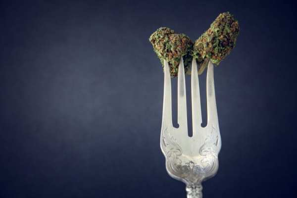 Raw cannabis bud on a fork close up