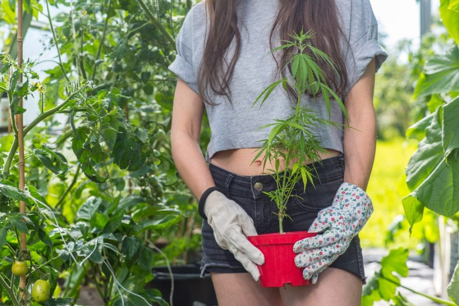 Girl Holding Cannabis Plant