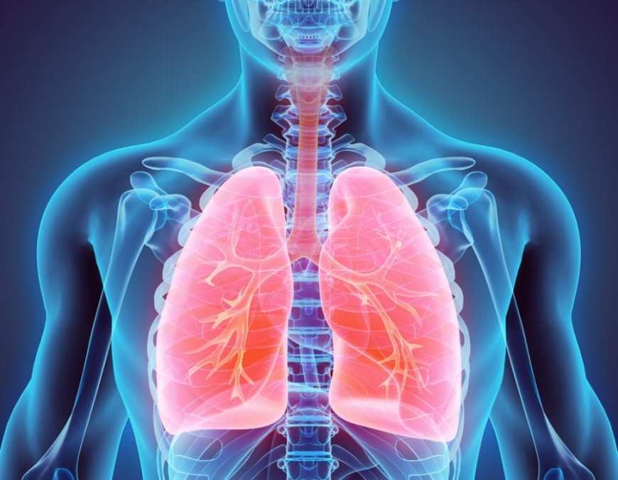 animation of healthy lungs