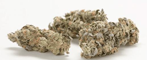 OG Shark Cannabis