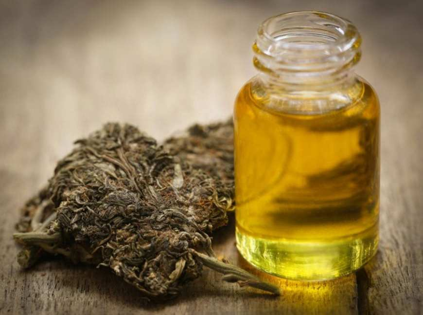 cannabis oil next to bud biovailability