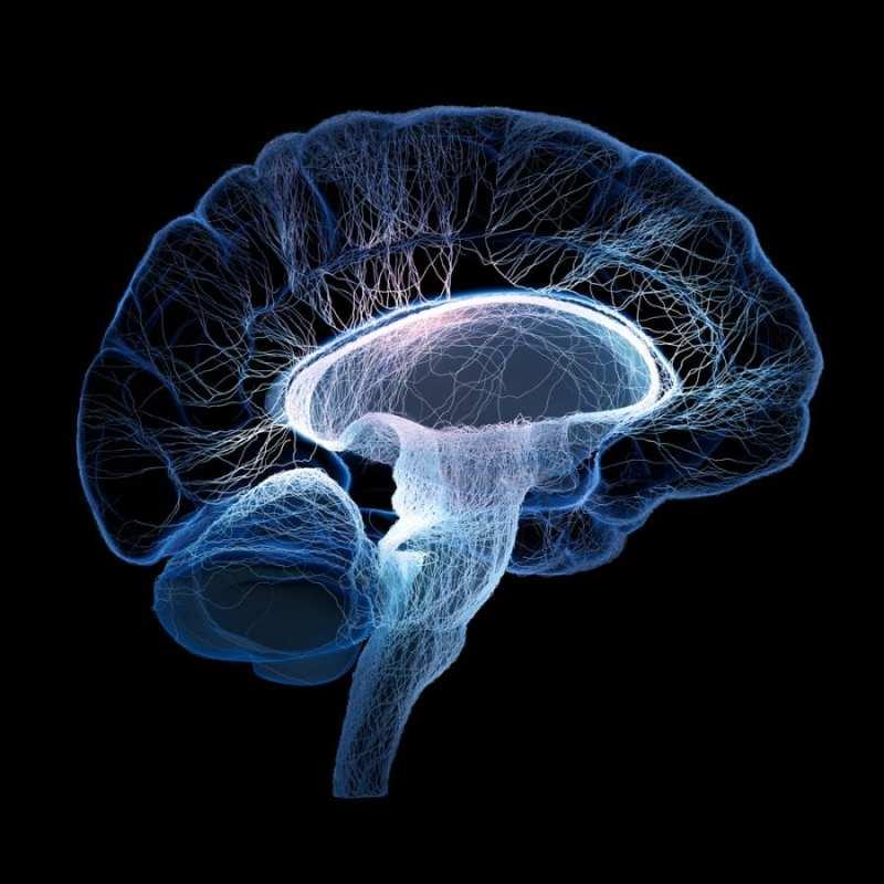 Human Brain concept art