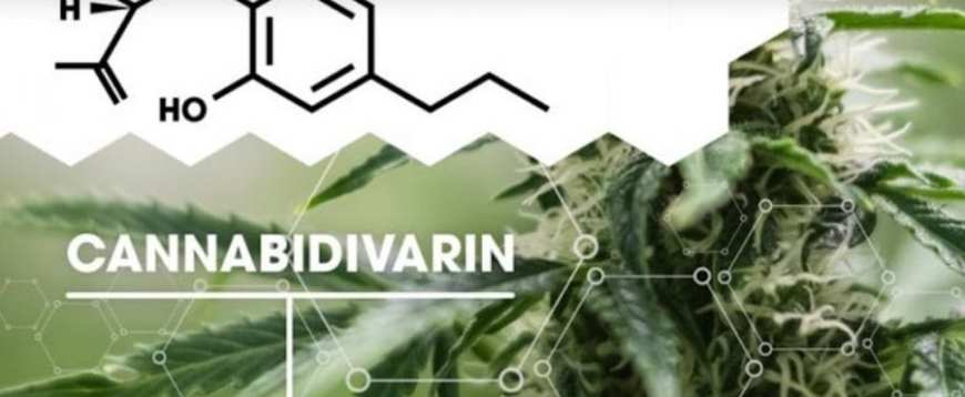 cannabis, CBDV, treatment, studies, cannabinoids, autism, medicine, research, endocannabinoid system, brain,