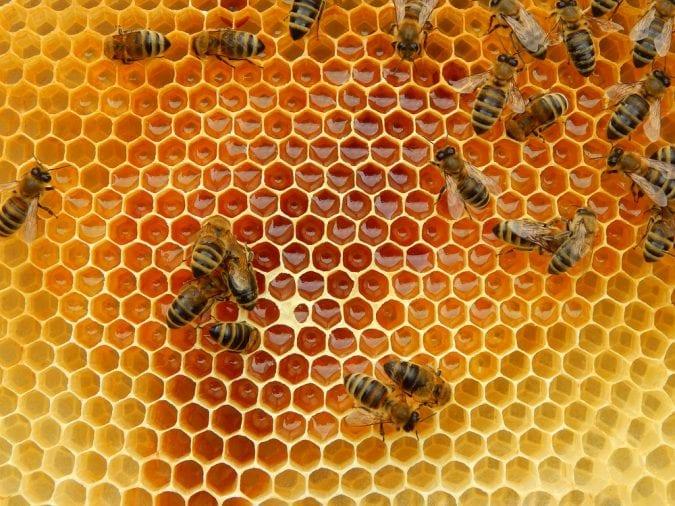 cannabis, cannahoney, CBD, THC, bees, controversy, cannabis products, bee trainer, legalization, recreational cannabis, medical cannabis