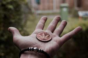 cannabis, economy, global trade, DEA, USA, Canada, legalization, EU, medical research, cannabis research