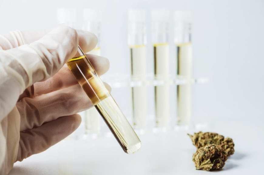cannabis, cannabis oil, cannabis extract, research, studies, synthetic cannabis, CBD, THC, cannabinoids, CBD oil, medical cannabis