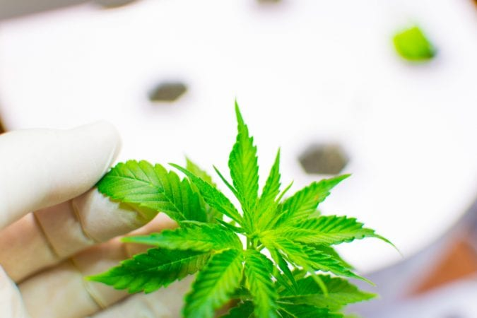 cannabis, cancer, tumours, research, USA, Canada, legalization, federal laws, Virginia study, THC, cancer research