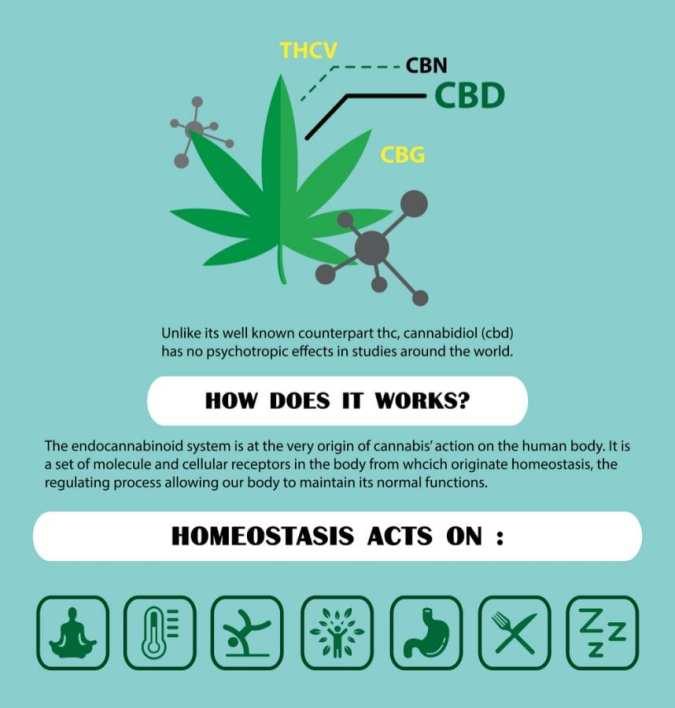 cannabis, CBD, THC, homeostasis, cannabinoids, synthetic cannabinoids, supplements, nutrients, disease, marinol, legalization