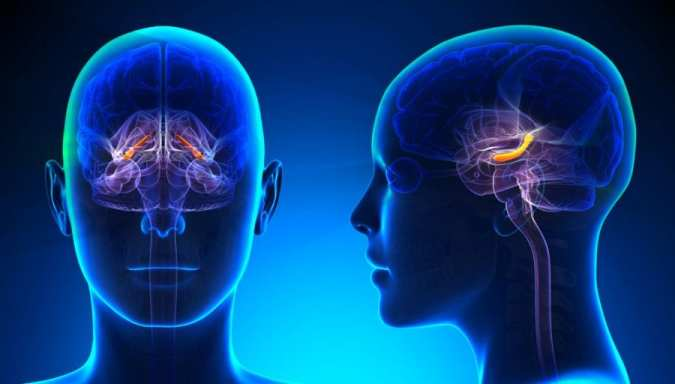 cannabis, medical cannabis, hippocampus, neurons, neurotransmitters, neuroprotectants, CBD, THC, cannabinoids, brain