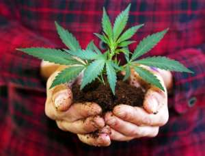 cannabis, Farm Bill, hemp, USA, legalization, hemp farmers, federal laws, state laws, medical cannabis, recreational cannabis, prohibition