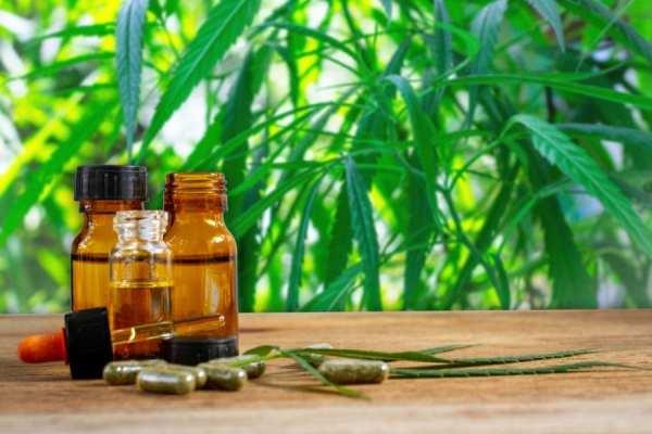 cannabis oil beside cannabis field