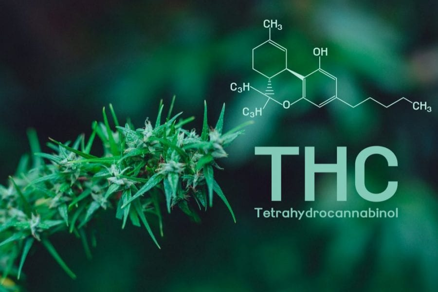 THC, high potency, cannabinoids, CBD, addiction, substance abuse, cannabis, medical cannabis, recreational cannabis, cannabis research